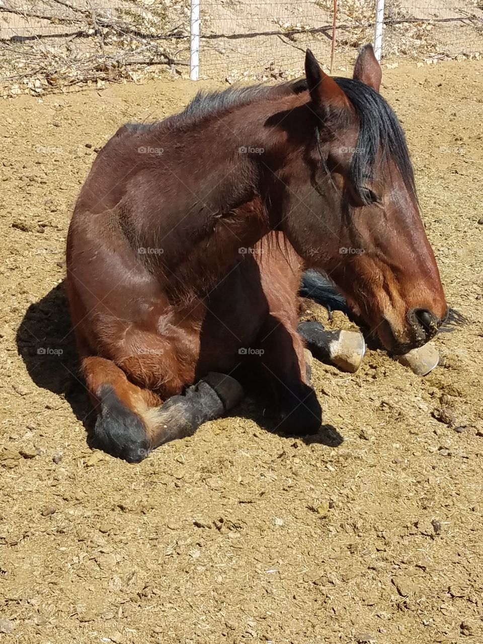 One relaxing horse