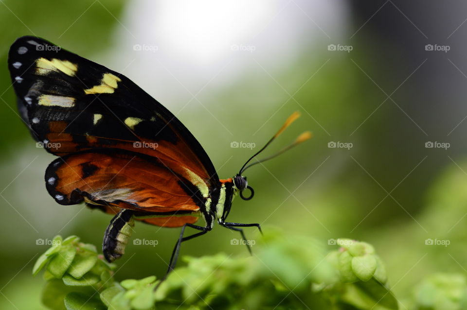 Butterfly perching on plant