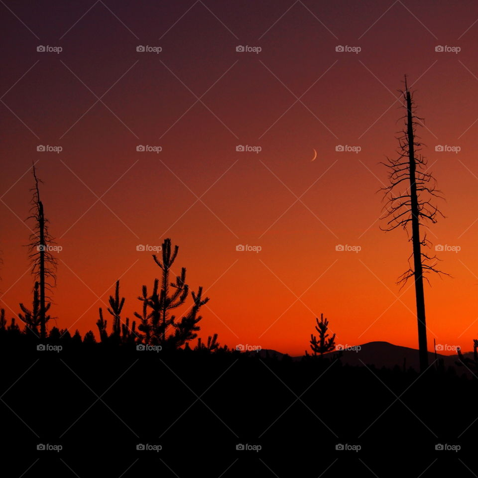 Pine trees silhouetted against a rich dark red and orange sky that is nearly dark at twilight in Central Oregon on a summer day.
