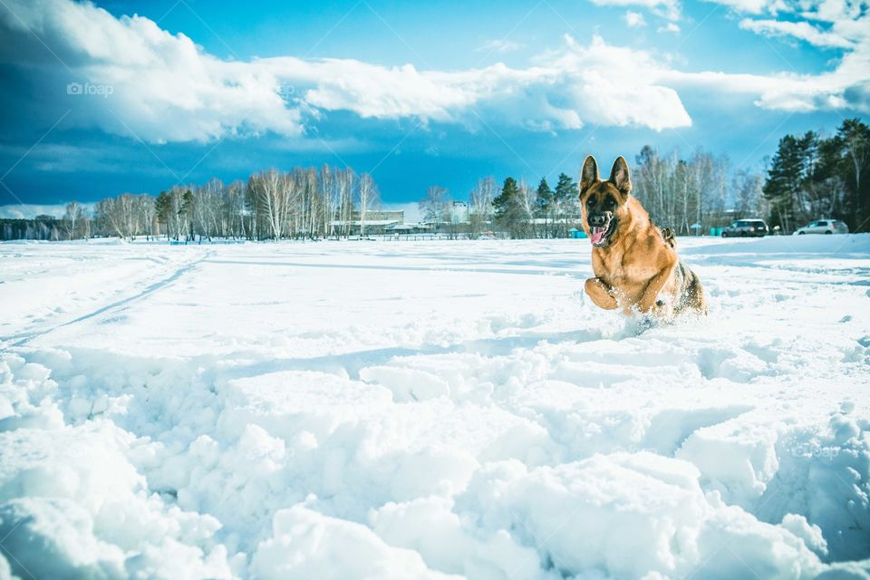 Dog playing in snowy weather