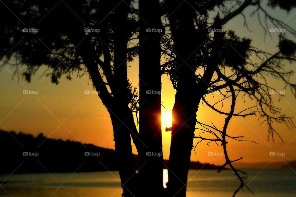 tree nature photography Sun Greece
