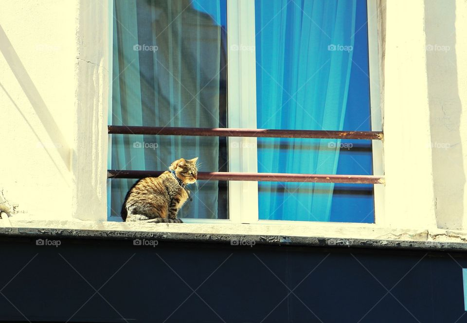 Cat in Paris