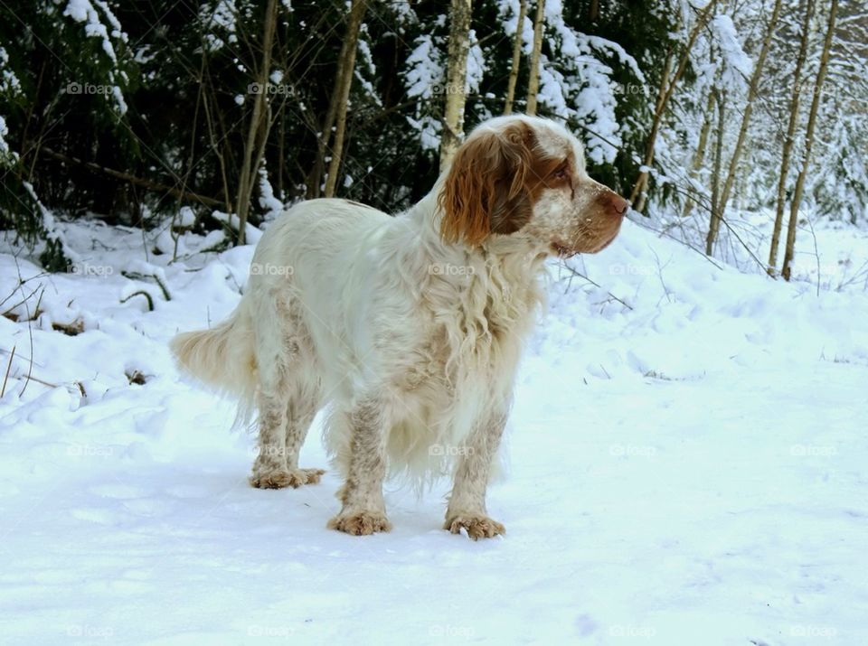 snow winter dog dogs by superthor