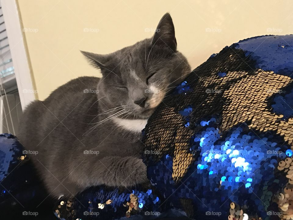 Sleeping cat with sequins pillow