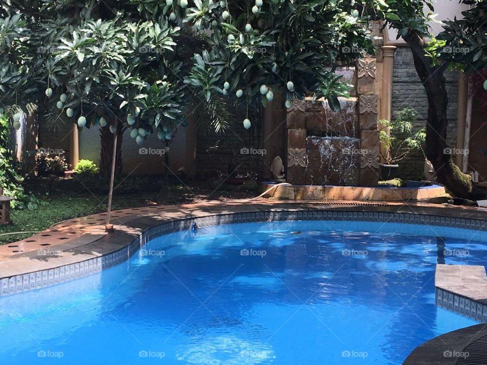 manggo on the pool