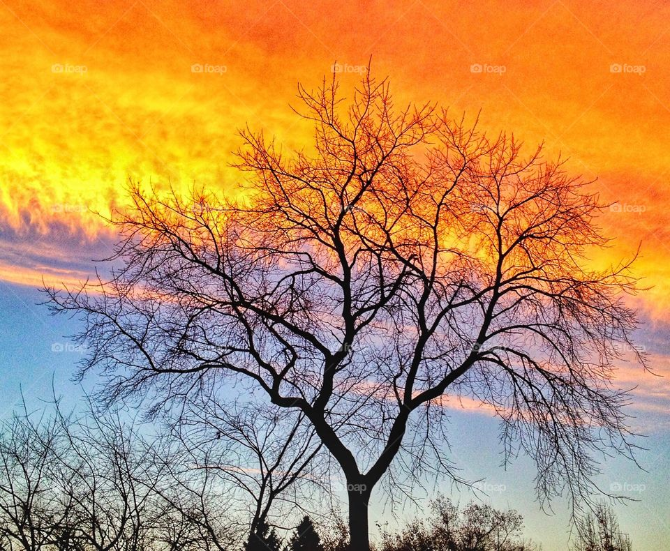 Morning sky  - captured almost four years ago... Ever since we adopted Balto, I've had many chances to enjoy the beautiful sunrises in the neighborhood... Except a few of the sub-zero Wisconsin winter mornings...