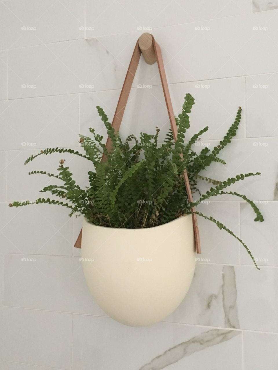 Potted plant hanging on wall