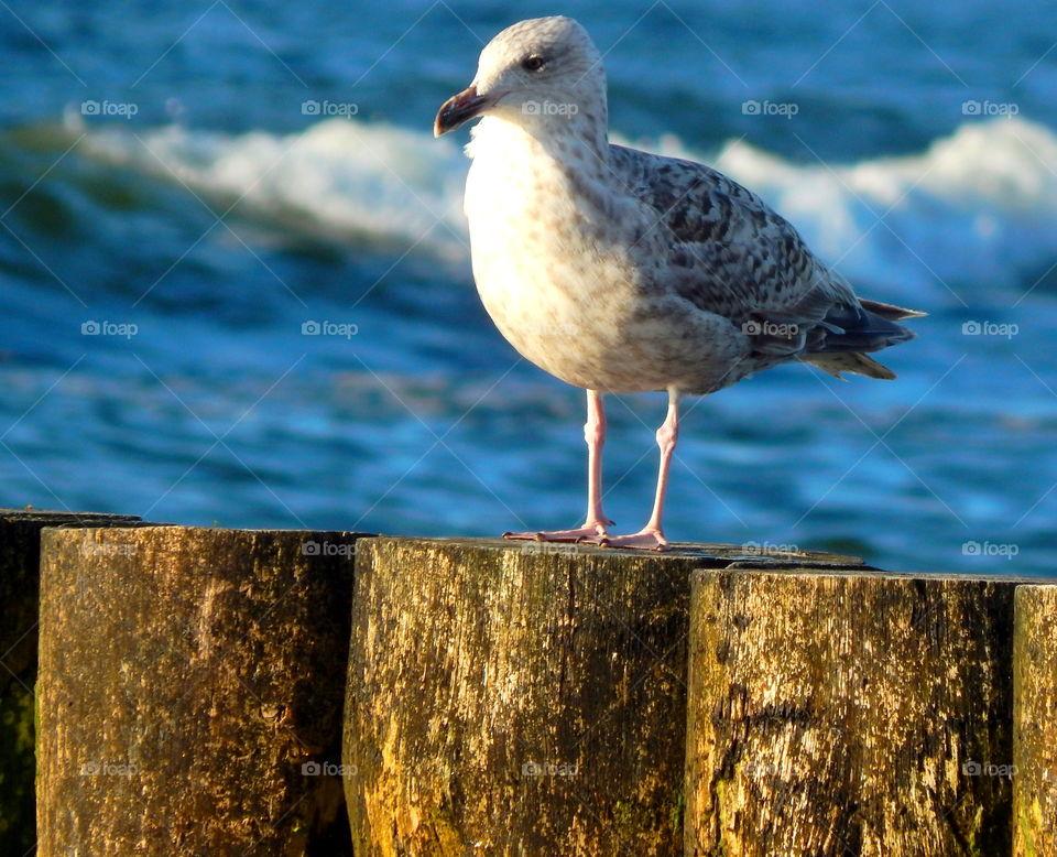 Seagulls sitting in the breakwater