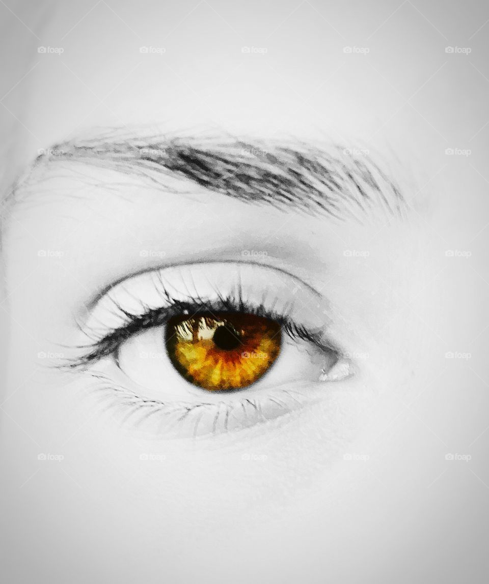 Into the amber eyes of the beheld