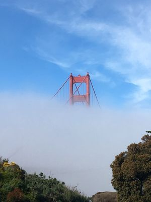 Rising from the Fog