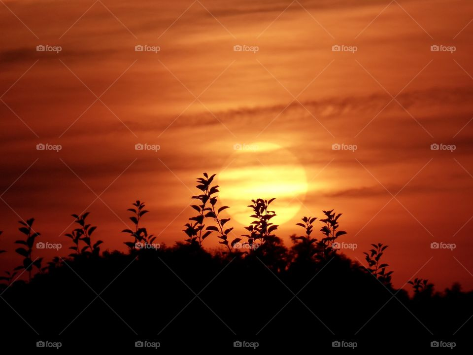 Sunset - Altes Land - Lühe