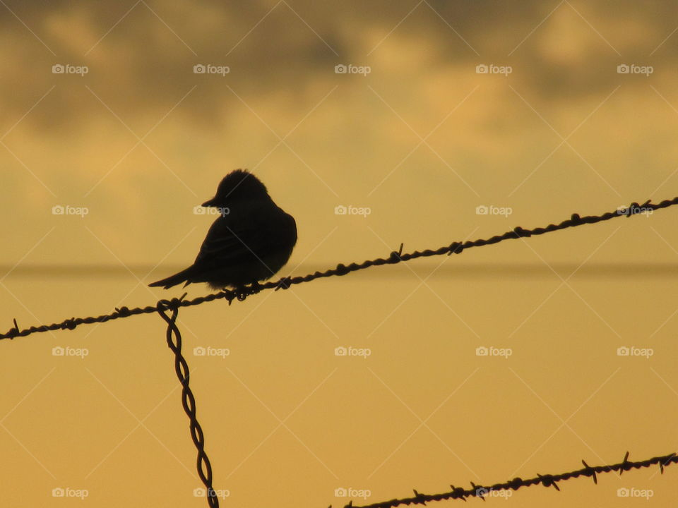 Bird sunset backdrop