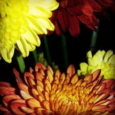Chrysanthemum Party