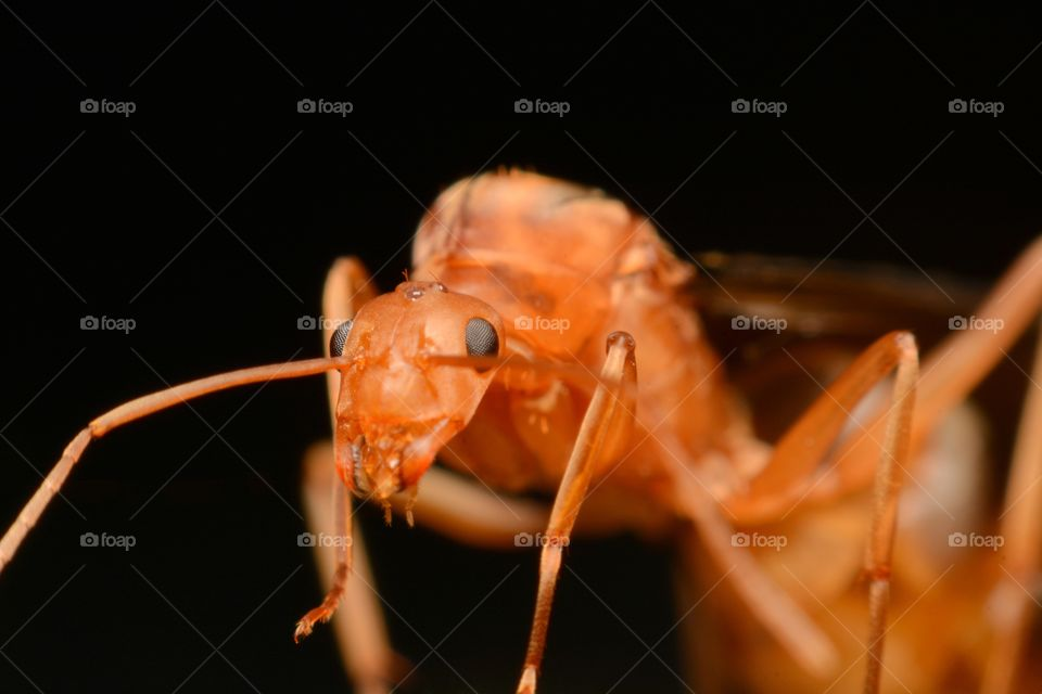 Insects. Super ant, Big eye