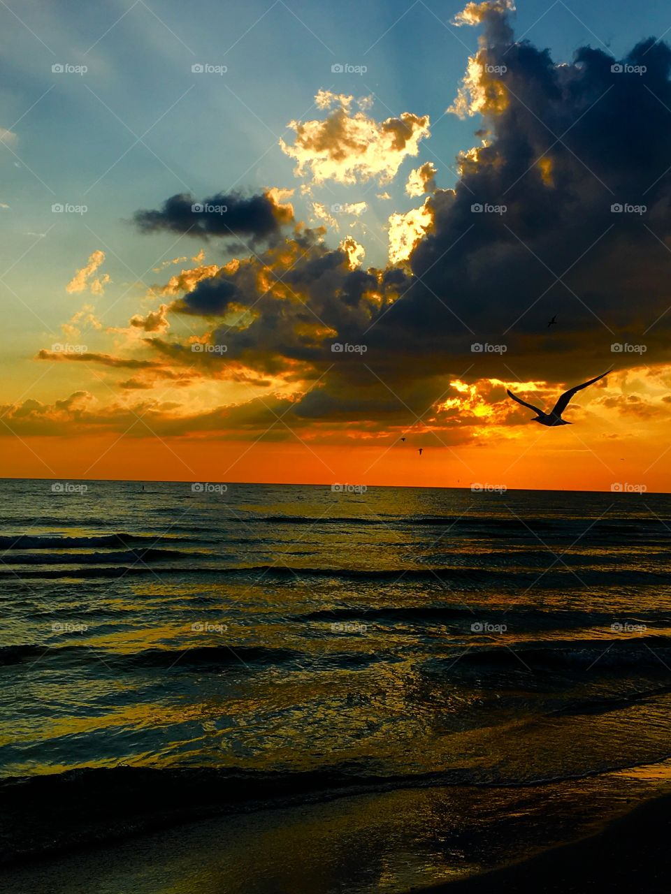 Silhouette of a bird flying against dramatic sky