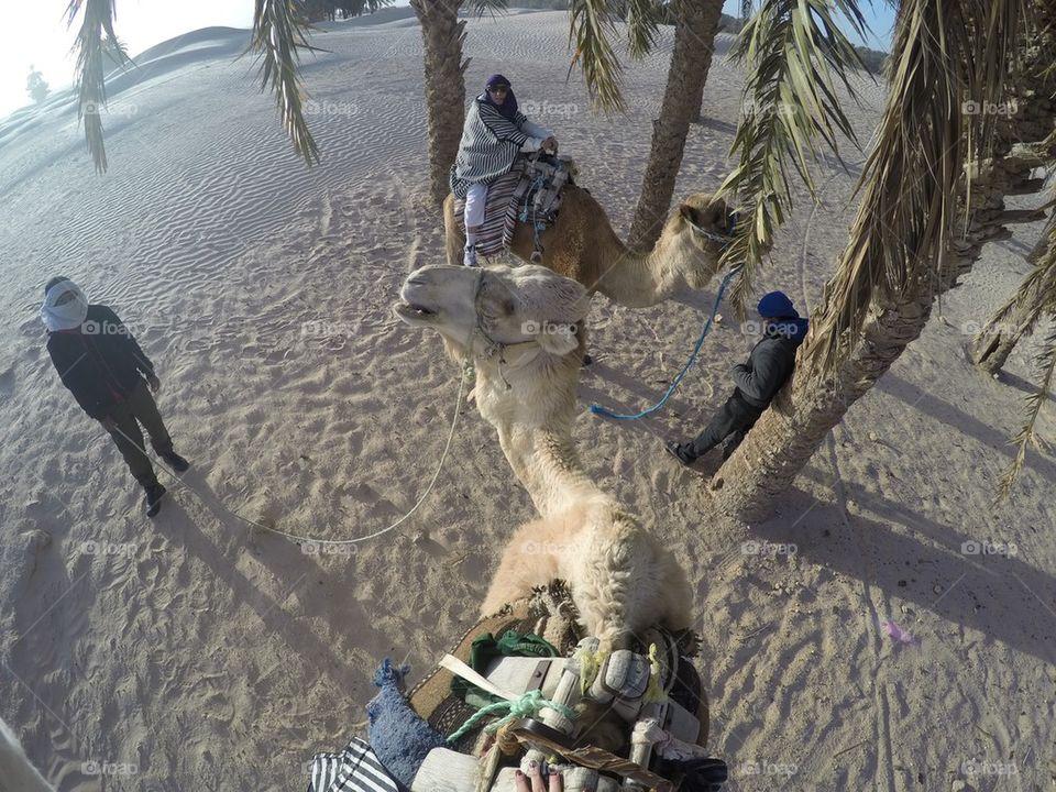 Camel ride in the Sahara desert in Tunisia