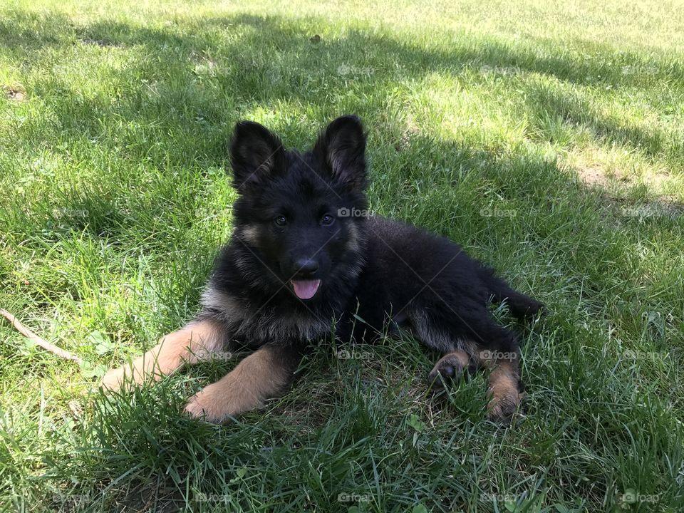 Puppy on grass