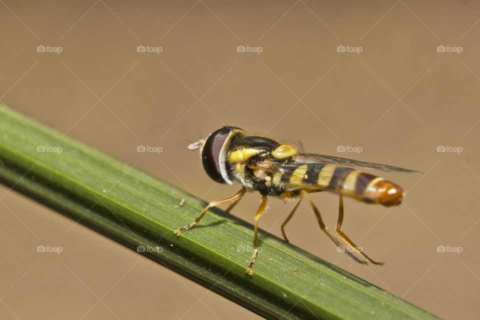 funny looking flying insect on a green plant stem
