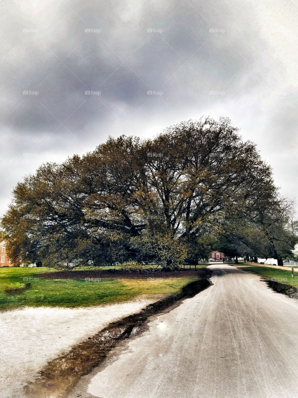 Dramatically Huge Tree