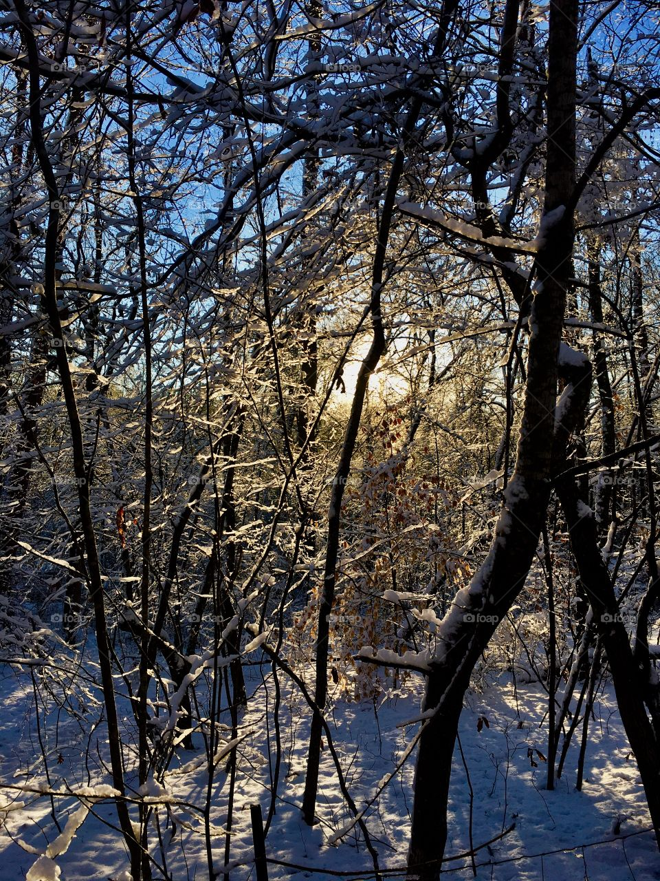 Early morning sunshine making its way through the snow covered branches