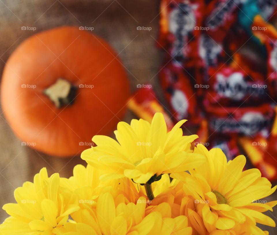 No Person, Flower, Nature, Bright, Color