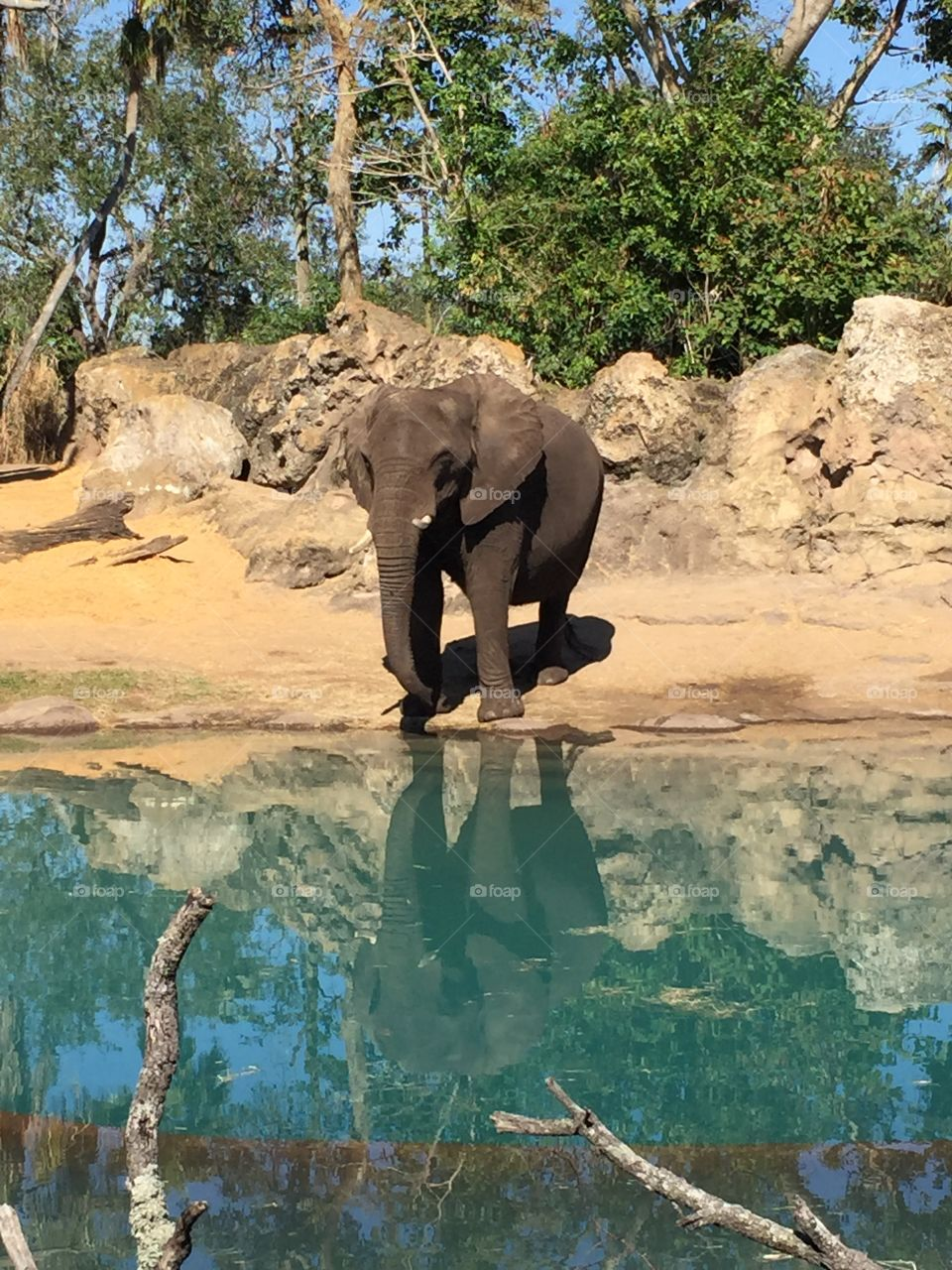 Animal Reflections