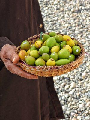 Person holding argan fruit