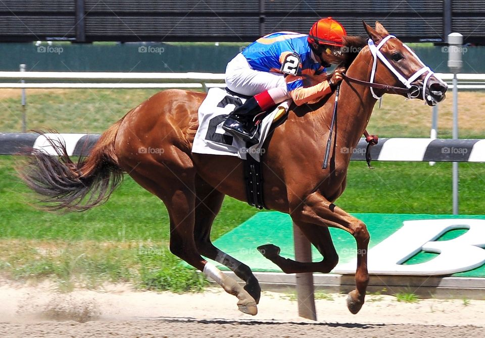 Gambling Geraldine. Beautiful chestnut filly Gambling Geraldine, wins her first start for John Velasquez and Todd Pletcher at Belmont park.