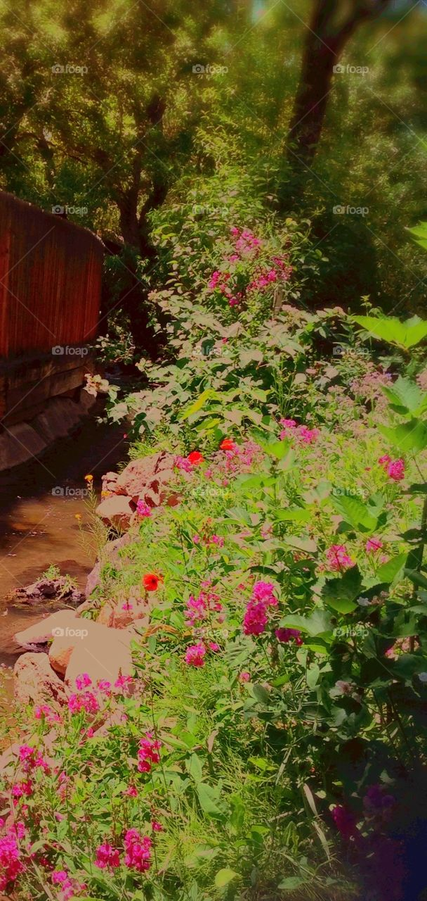 Pink sweet pea garden and stream