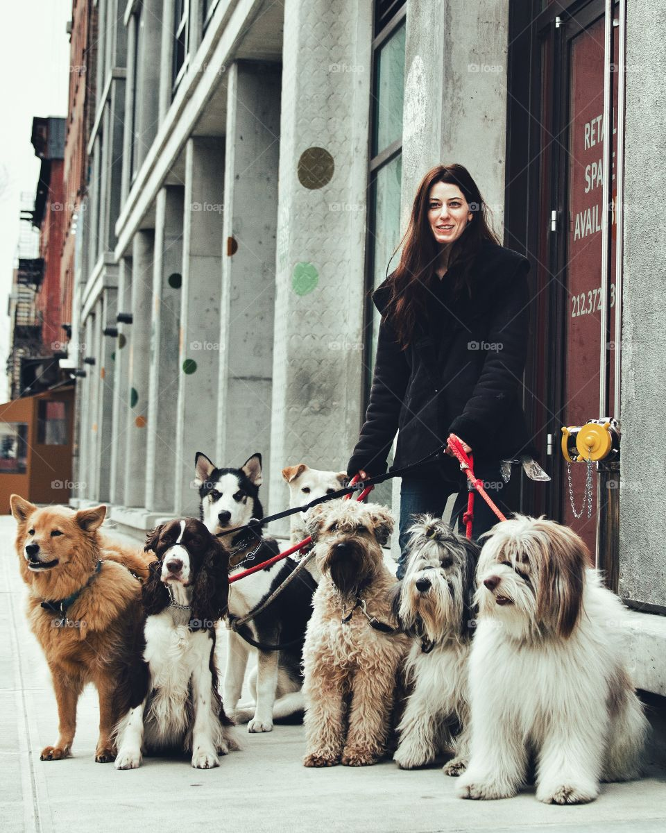 Pet owner holding group of dogs