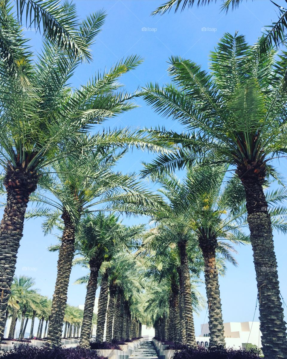 Palm trees growing in a row