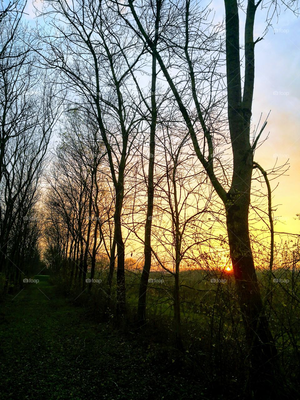 Sunset in the Nature