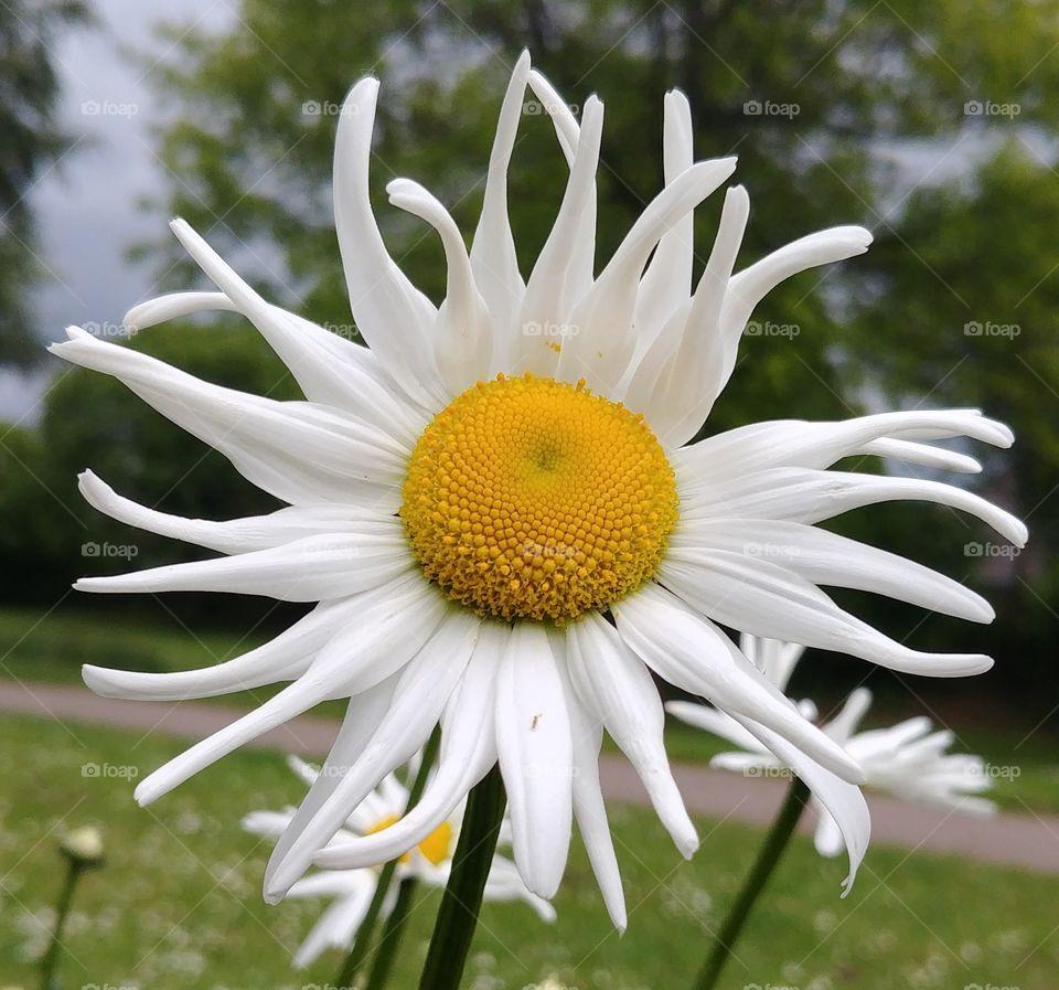 flower Frühling spring Blüte blume blühen weiß gelb