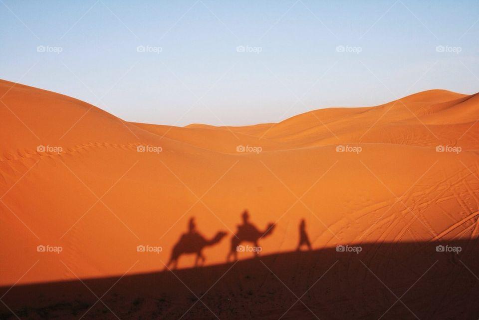 Camel shadow on the sand dune in desert