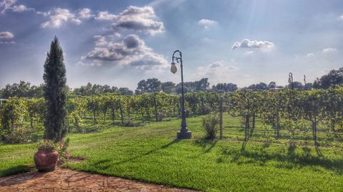 vineyards. At the Haak Winery in Texas.