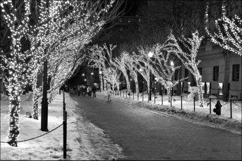 Columbia University Lights. The illuminated entrance to Columbia University at night in black and white. Campus X-mas lights Columbia University.