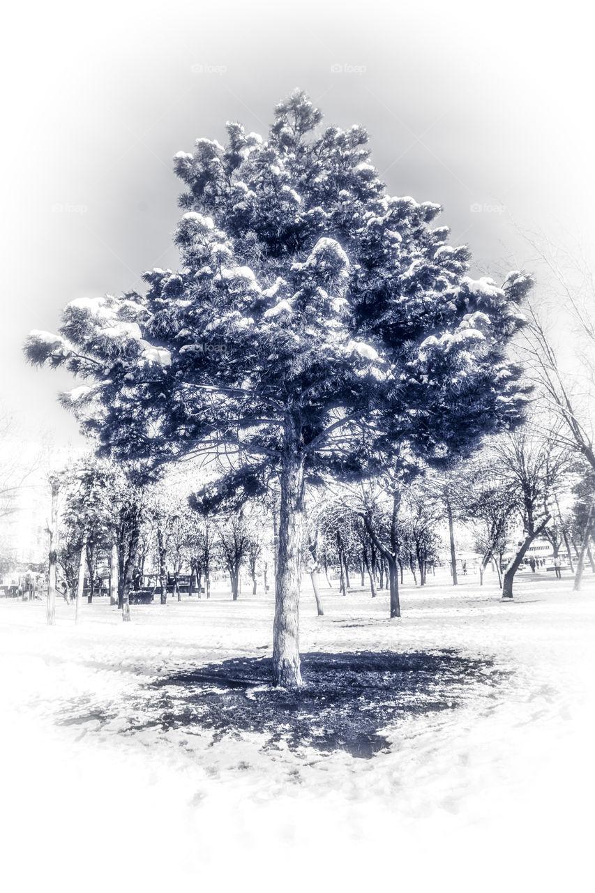 Alone tree and winter black white