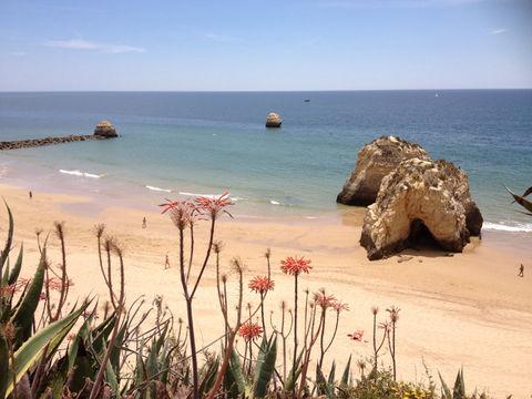 beach coast portugal flowers by graphidyliik