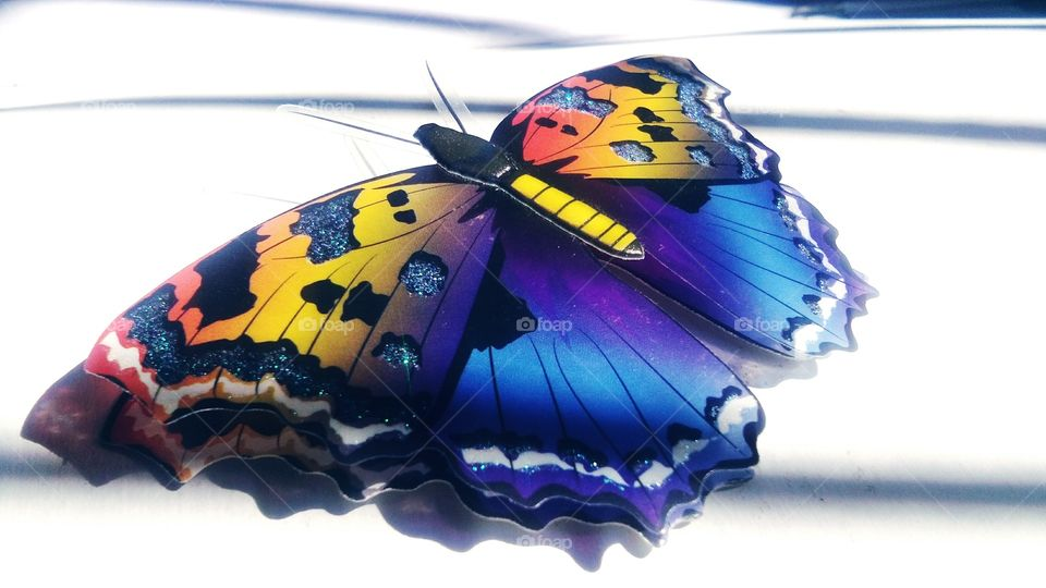 blue beautiful butterfly