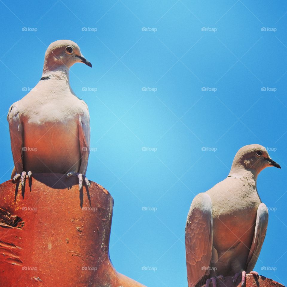 View of two pigeon