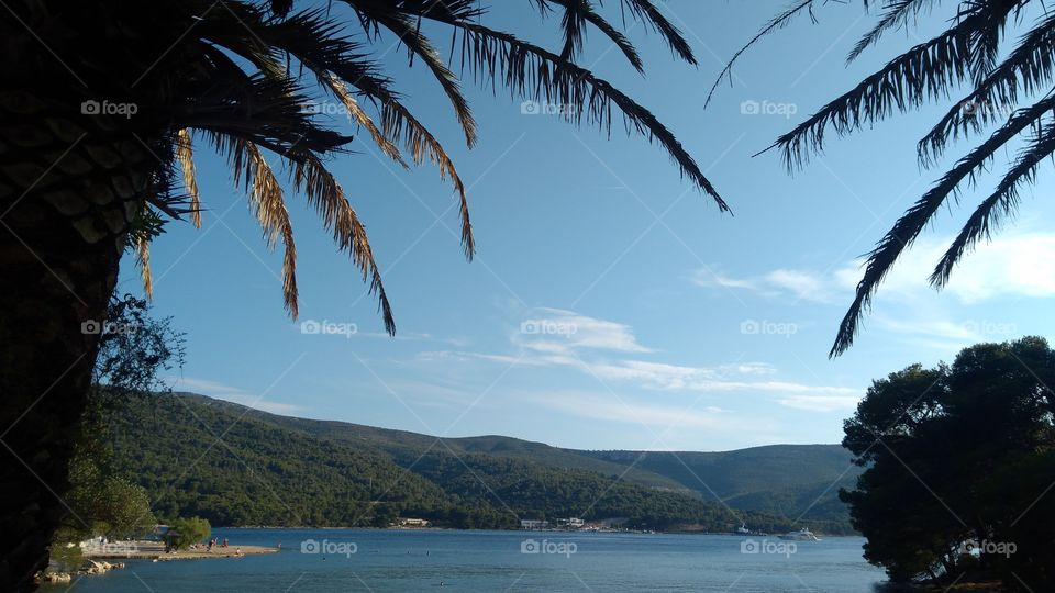 On the Island Hvar Under the Palms