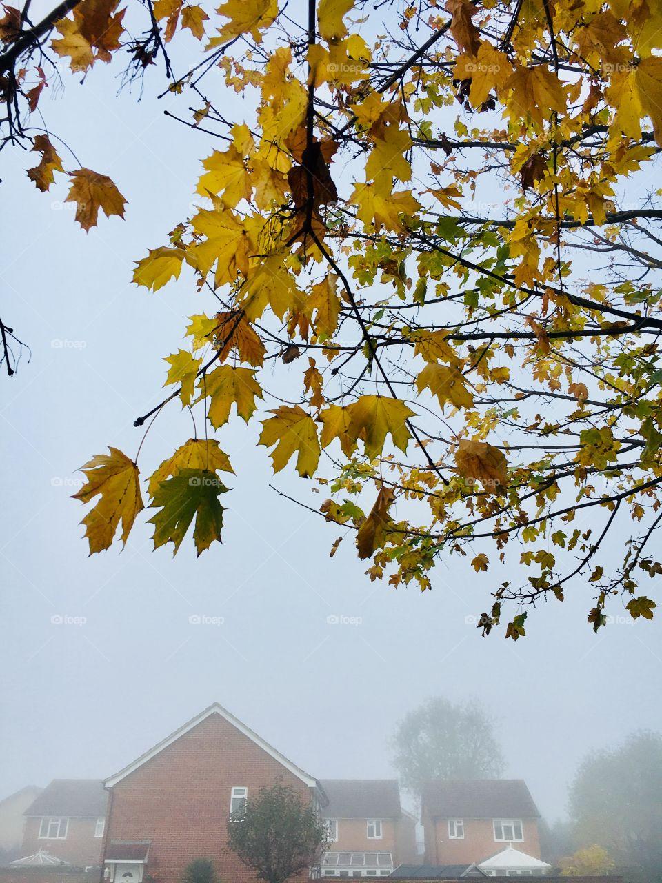 Fog Autumn🍁🍂