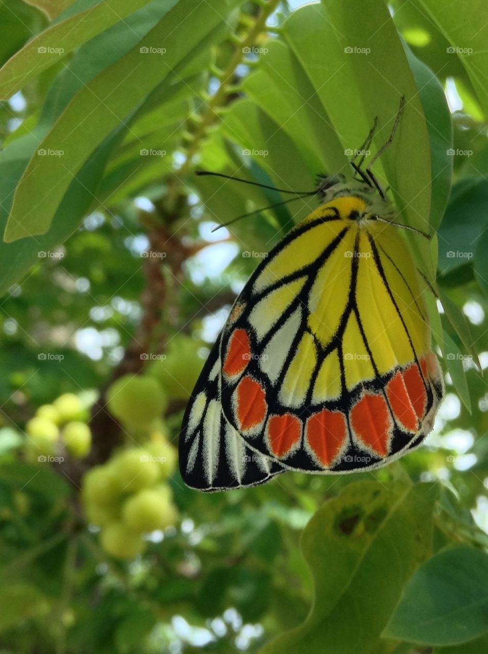 Colourful butterfly on leaves