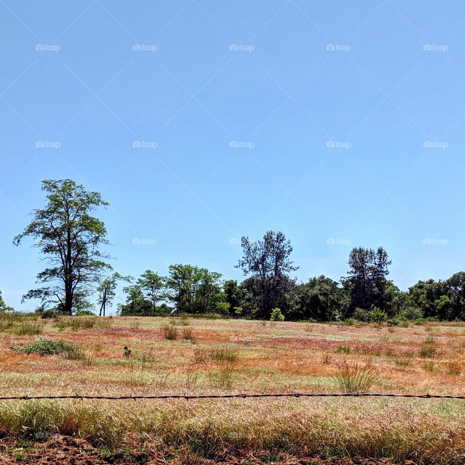 A dry field amidst the Californian summer, where the green fades into various brown, reds, and yellows.