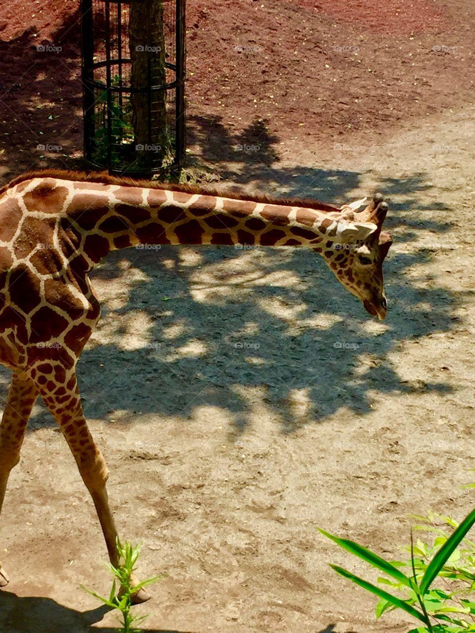 Angles.   Tama Zoological Park. Tama, Japan