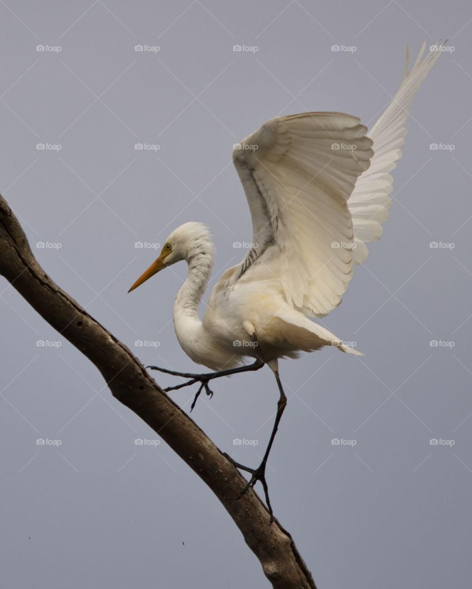 landing in a tree