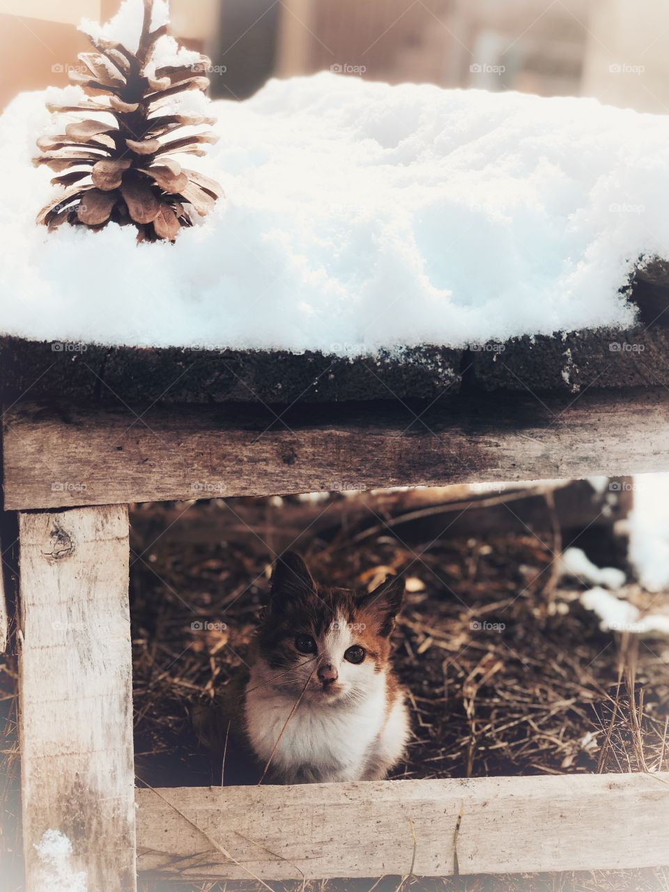 snow and kitty