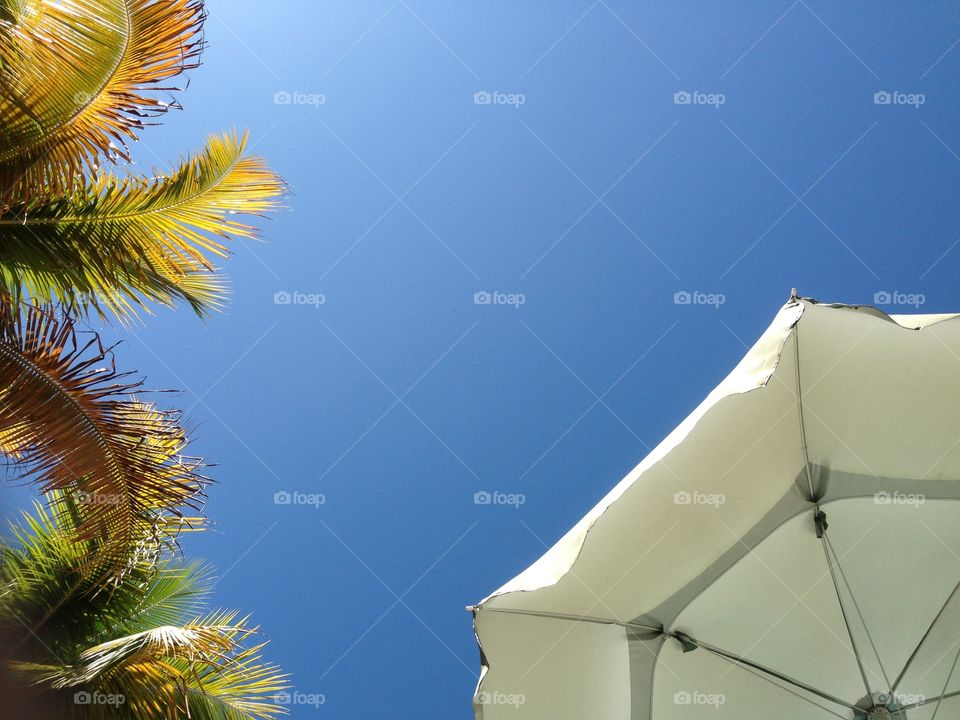 Low angle view of palm trees and beach umbrella