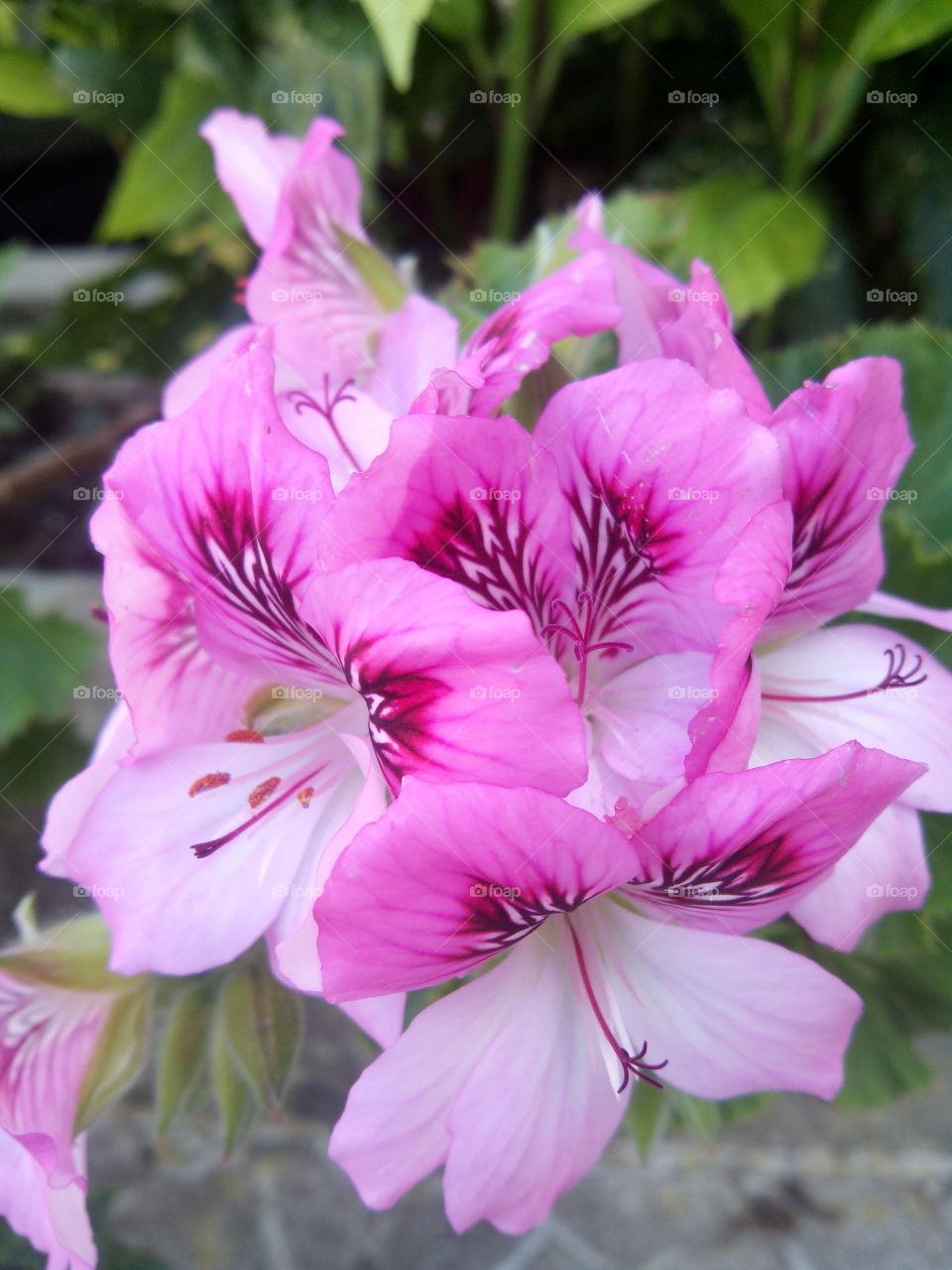 plantas. flores