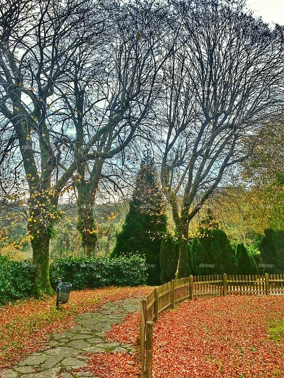 End of Autumn   image, fence, trees, leaves